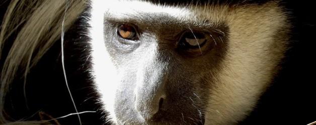 Portraits de mammifères…suite