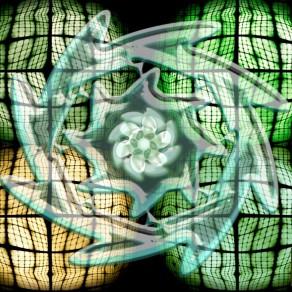 Lotus en satori
